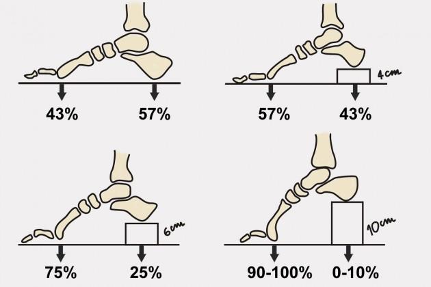 Procentowe porównanie obciążenia głów kości śródstopia i kości piętowej w butach płaskich i na obcasie.